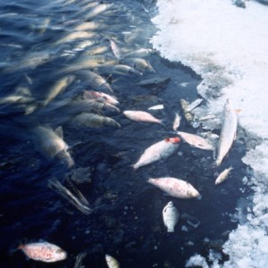Fish_Kill