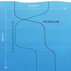 dissolvedoxygen_cline-pycno