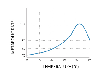 water_temperature_metabolic_rate