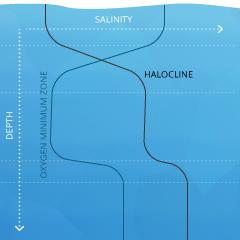 salinity_cline-halo