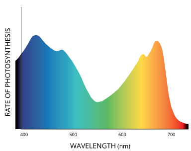 photosynthetically_active_radiation_wavelengths