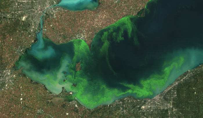 In 2011, Lake Erie experienced the worst blue-green algae bloom in decades (Photo Credit: MERIS/NASA; processed by NOAA/NOS/NCCOS )