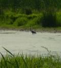 Panzner Wetland Wildlife Reserve