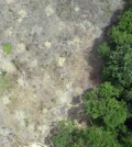 An aerial view of deforestation in Sumatra captured by a Conservation Drone (Credit: Orangutan Conservancy)