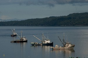 Baynes Sound (Credit: Vancouver Island University Deep Bay Marine Field Station)