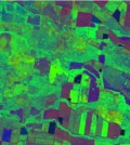 Crop cover images from vegetation monitoring tool (Image: Peter Scarth, TERN)