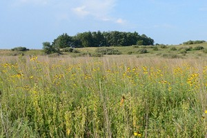 A grasslands praire in The Wilds conservation park near the gas drilling and air monitoring site (Credit: USDA, via Flickr)
