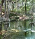 matt cohen Mill Pond Spring in the Ichetucknee Springs Complex (Credit: Larry V. Korhnak)
