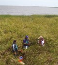 storm surge / The LSU team placed sensors in a salt marsh (Credit: LSU)