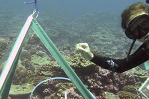 ocean floor tents / Instruments within tent chambers help gauge the health of coral reefs (Credit: Scripps Institution of Oceanography)