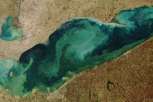 Satellite image showing stirred-up suspended sediment and algae in Lake Erie (Credit: NASA)