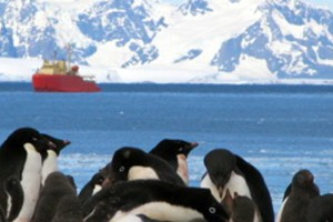 Penguins with the research vessel Laurence M. Gould in the background (Credit: VIMS)