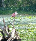 White Lake wetlands in Louisiana (Credit: Louisiana Department of Wildlife and Fisheries)