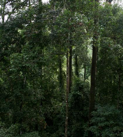 Rainforest in Borneo (Credit: Insight Sabah)