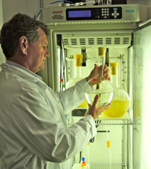 William Cochlan checks a culture of phytoplankton diatoms (Credit: Chris Ikeda/SF State)