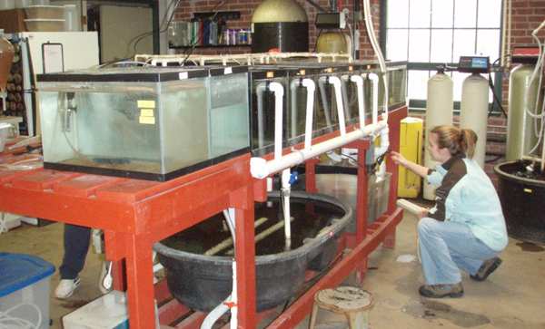 Thomas More College Biology Field Station aquaculture lab maintains fathead minnows for study