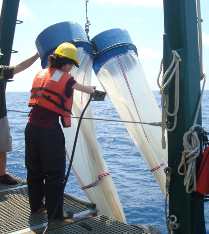Image: Samantha Bosman, a technician with the FSU Coastal & Marine Lab, prepares to deploy bongo nets to collect plankton. RV Weatherbird II (Photo credit: Jeff Chanton, FSU)