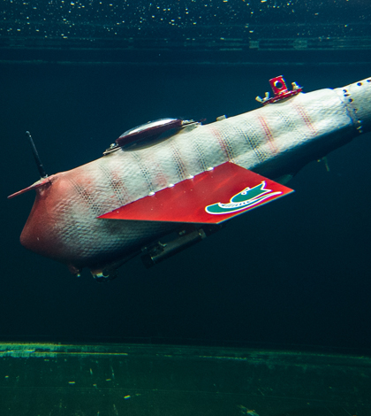 Xiaobo Tan's lastest verison of the robotic fish swims in a tank in his lab (Credit: G.L. Kohuth)