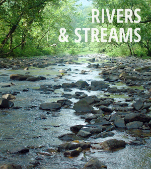 Rivers & Streams news