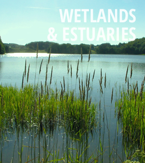 Wetlands and Estuaries News