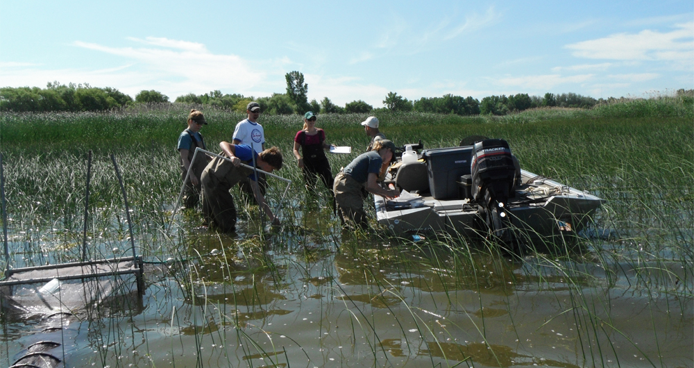 A crew collects data in a Great Lakes coastal wetland