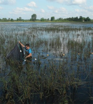 Great Lakes coastal wetland
