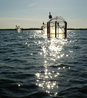 Plastic bag mesocosms in the Gullmar Fjord for ocean acidification study (Credit: Gertje König)