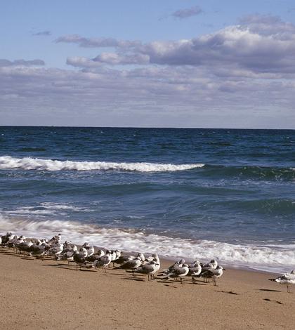 Florida's Atlantic coast (Credit: Library of Congress)
