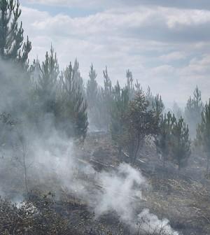 A controlled burn in Australia (Credit: Ryan Wick, via Flickr)