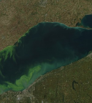 The 2011 Lake Erie algal bloom covered much of the lake's western basin (Credit: NASA)