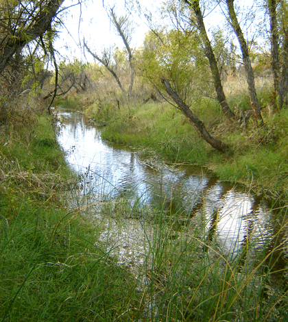A healthy riparian buffer zone on Buck Creek near U.S. Highway 83 works to protect water quality during runoff events. (Credit: Texas AgriLife Research)