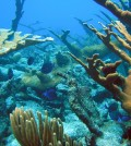 A coral reef in the U.S. Virgin Islands (Credit: NOAA)