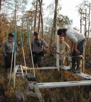 A research crew assembles a sediment elevation table in a bald cypress swamp (Credit: Beth Middleton)