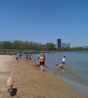 A Lake Michigan beach in Chicago (Credit: Chris Hamby, via Flickr)