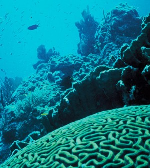 Coral reef in Florida (Credit: Jerry Reid, U.S. Fish and Wildlife Service)