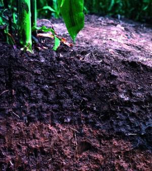 Soil profile (Credit: NRCS)