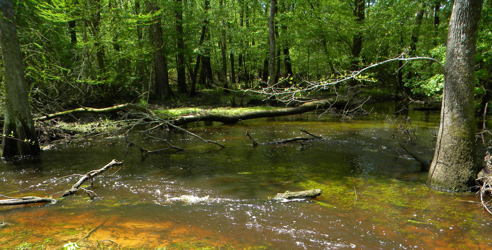 Sandy Run in North Carolina, one of the seven study streams, is a watershed where water and nitrate flow from fields to streams primarily through quick flow paths such as overland flow and tile drains (Credit: USGS)