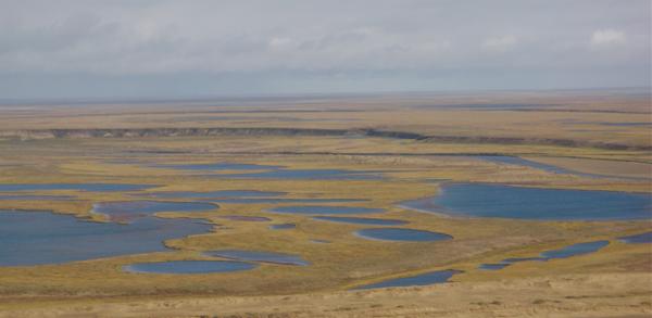 Thaw lakes dominate the Arctic Alaskan landscape (Credit: John Lenters)