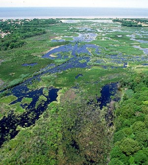 Wetlands on Cape May, N.J. (Credit: Anthony Bley, U.S. Army Corps of Engineers)