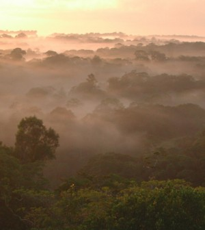 Amazon canopy (Credit: Fabrice Marr, Creative Commons)