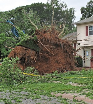A tree uprooted by the rare tornado detected by the Delaware Environmental Observing System (Credit: Tammy Beeson/University of Delaware)