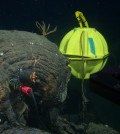 A seismometer inserted into a hole drilled in seafloor lava. Eight of these instruments were installed at an ocean spreading-center volcano 150 miles off Vancouver Island. (Credit: John Delaney and Deborah Kelley, UW)