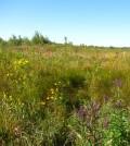 A restored wetland in Northwest Indiana (Credit: Christopher Craft)