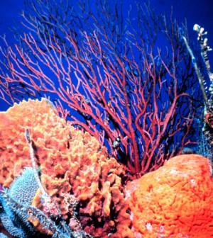Coral Reef (Credit: NOAA)