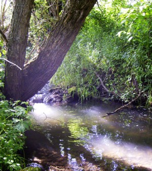 Stream temperatures in channels shaded by trees on the bank stay cooler than exposed channels (Credit: Ben Cross)