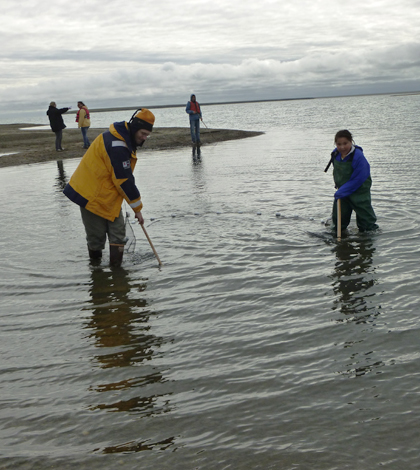 Students Seining in Kaktovik Lagoon during Camp ANWR (Credit: Carla Stanley)