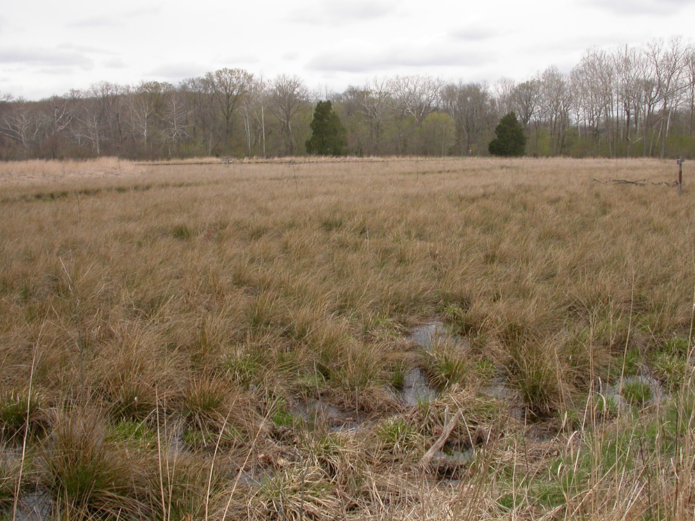 This wetland mitigation project wasn't designed with connectivity but a stream broke through a berm and forced a connection (Credit: USGS)