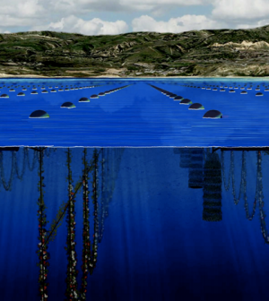 Top image: An illustration of the proposed Catalina Sea Ranch shellfish farm (Credit: Catalina Sea Ranch)