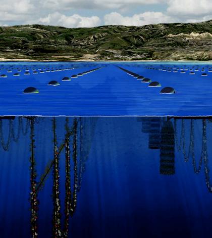 Top image: An illustration of the proposed Catalina Sea Ranch shellfish farm (Credit: Catalina Sea Ranch)