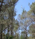 Flux tower measures CO2 exchange in a North Carolina forest (Credit: Michael Gavazzi/USDA Forest Service)